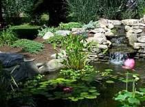 New Jersey Pond Supplies